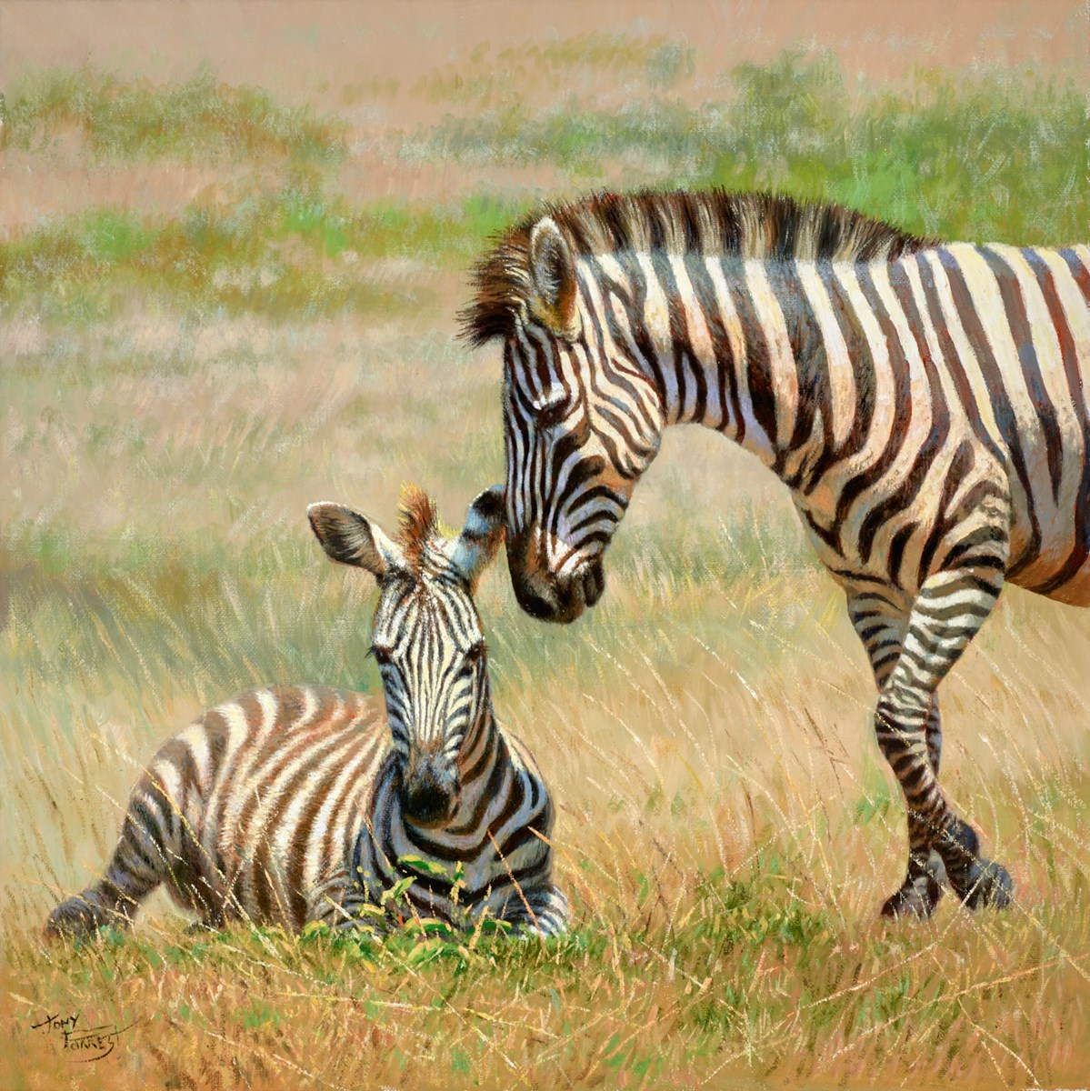 Zebra and Foal by tony forrest -  sized 18x18 inches. Available from Whitewall Galleries